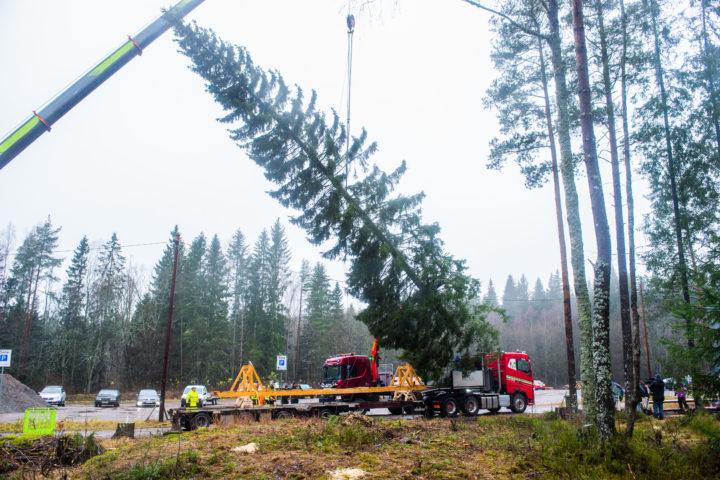 Transport av juletre for Oslo Kommune